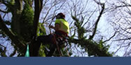 Forestry & Tree Surgery